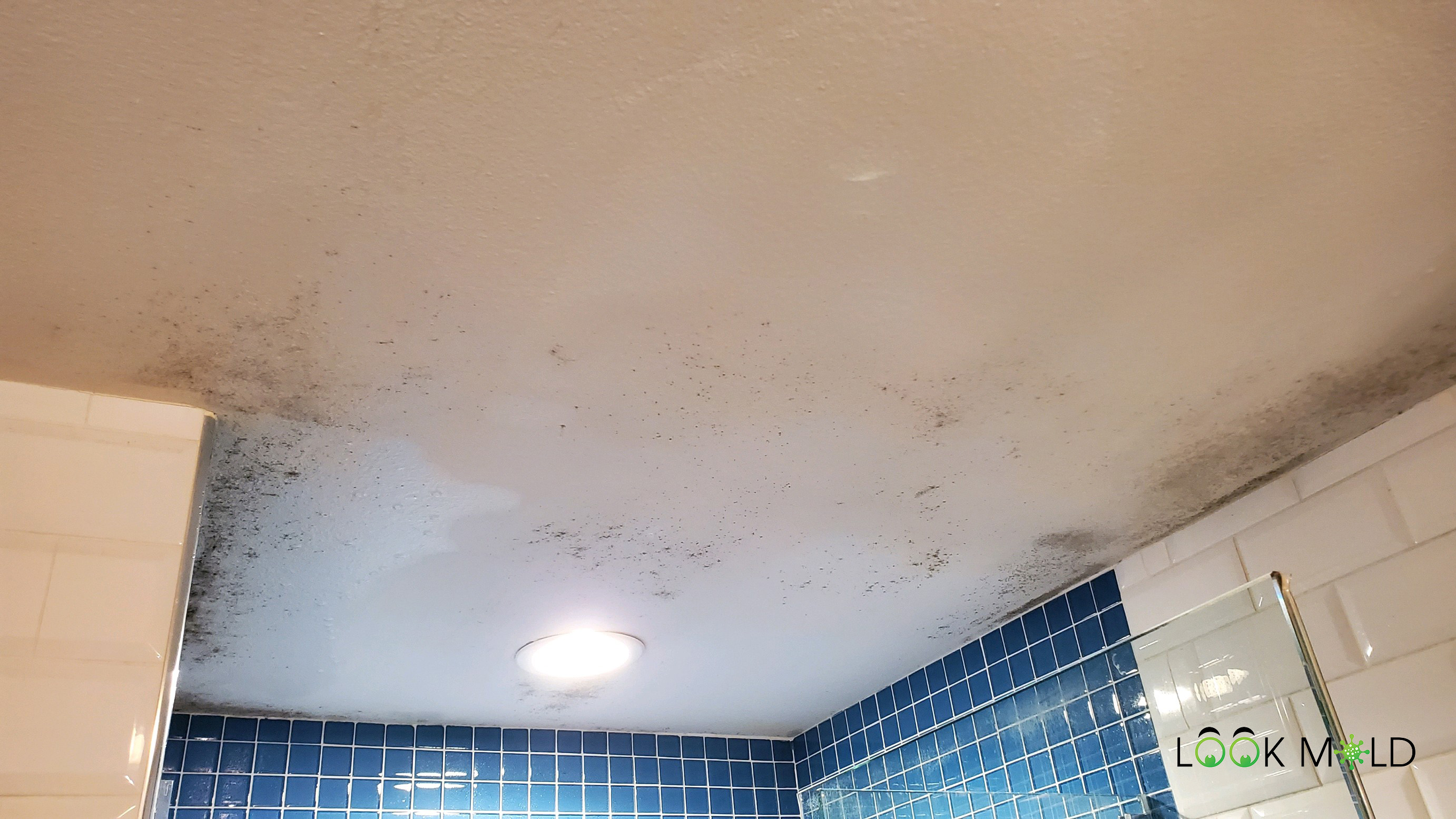 How To Clean Mold From The Shower Ceiling Is It Possible