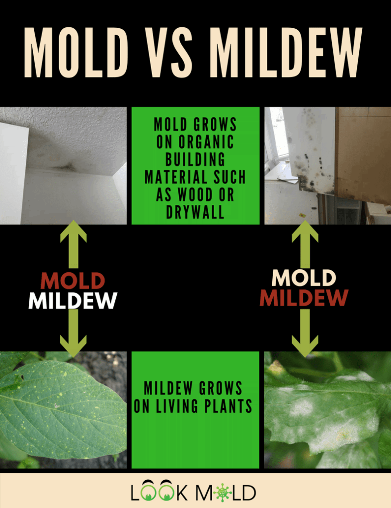 Does Mold Smell >> Do You Really Need A Mold Inspection & Is It Worth The Cost? | Lookmold